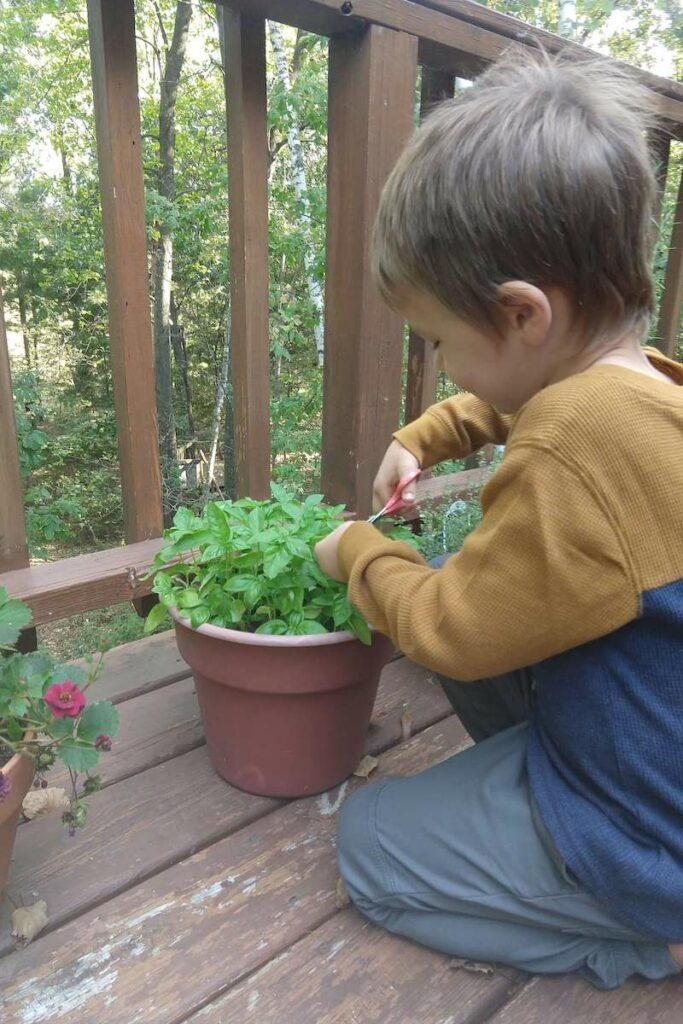 Montessori Homeschool Making an Herb Book