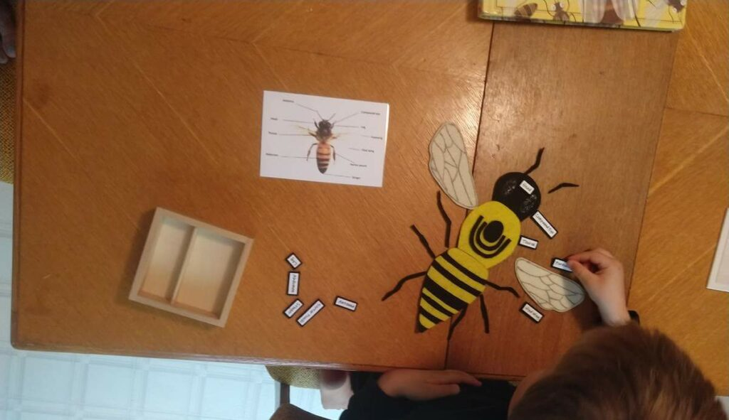 Preschool learning about bees